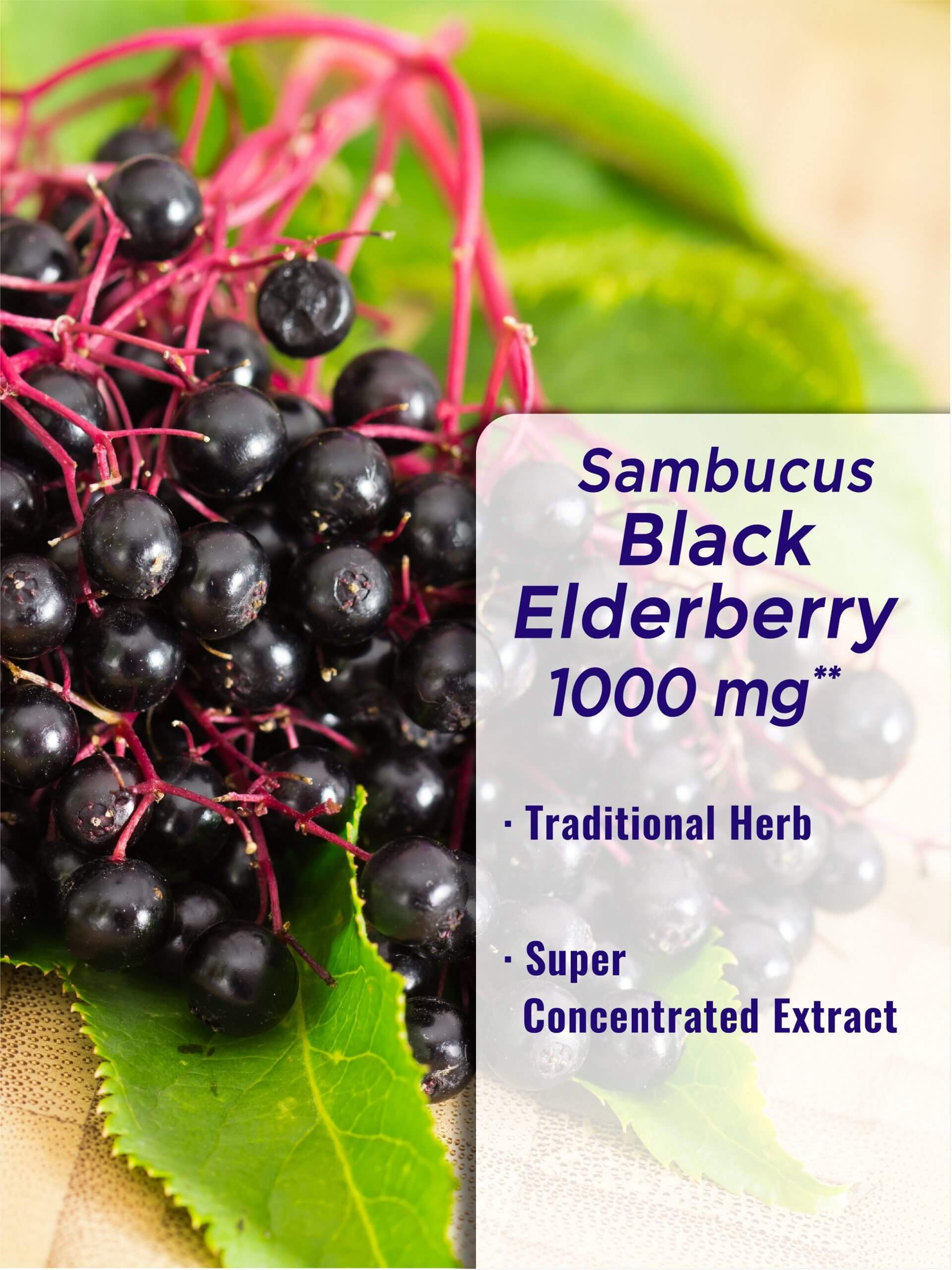 Sambucus Black Elderberry 1000 mg**
